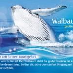 Karte Walbauch Klang der Wale